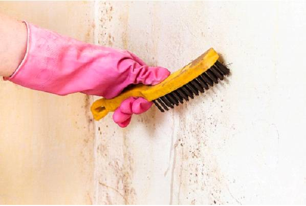 Benefits of Stain-Resistant Paint and Why You Need It